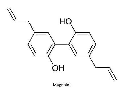 당후박(唐厚朴) Magnoliae Officinalis Cortex